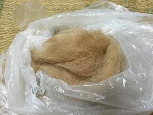 柴犬ヒロ-抜け毛