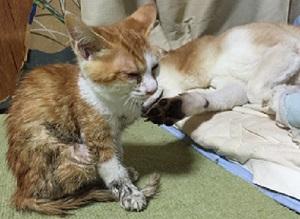 猫サクラ-